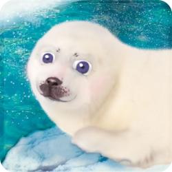 101 Seal Pets